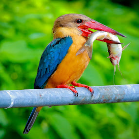 by Simon Yue - Animals Birds (  )