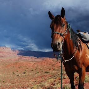 by Julie Zaranek - Animals Horses