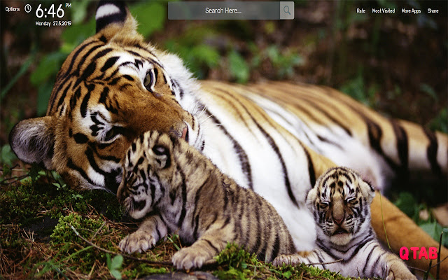 Tiger Wallpapers HD Theme
