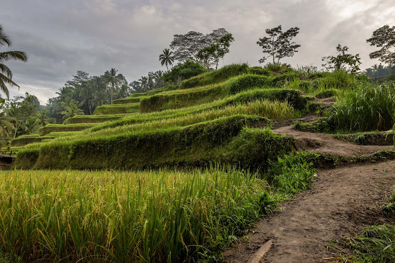 Rice Terraces Way di Manuel G. Ph.