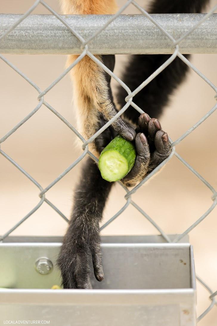 Gibbon Conservation Center Santa Clarita CA.