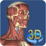 3D Anatomy Icon