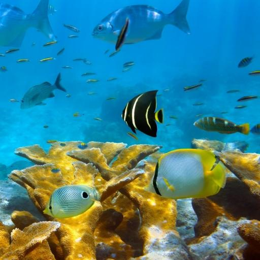 Рыбы, кораллы, море (app)