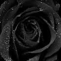 Black Rose Live Wallpaper icon