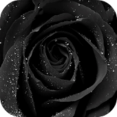 Black Rose Live Wallpaper