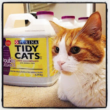 Photo: Mr.Tom enjoys his new Purina Tidy Cats batch! #intercer #KittyOccasions #cat #cats #pet #pets #petsofinstagram #catsofinstagram #litter #purina #tidycats #beautiful #pretty #happy #clean #clump #portrait #orange #white - via Instagram, http://ift.tt/1p6B7Ns