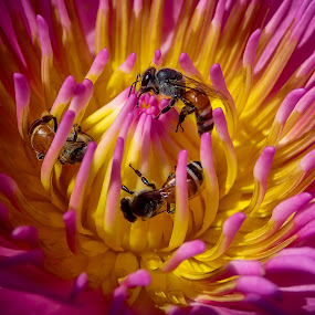 Flower and Bees by Lemuel Lee - Animals Insects & Spiders