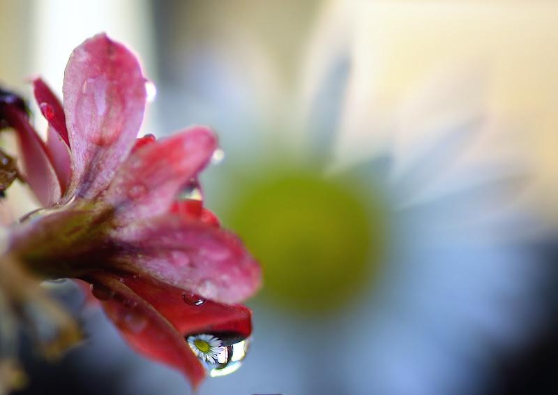 La natura un una goccia di Rossella13