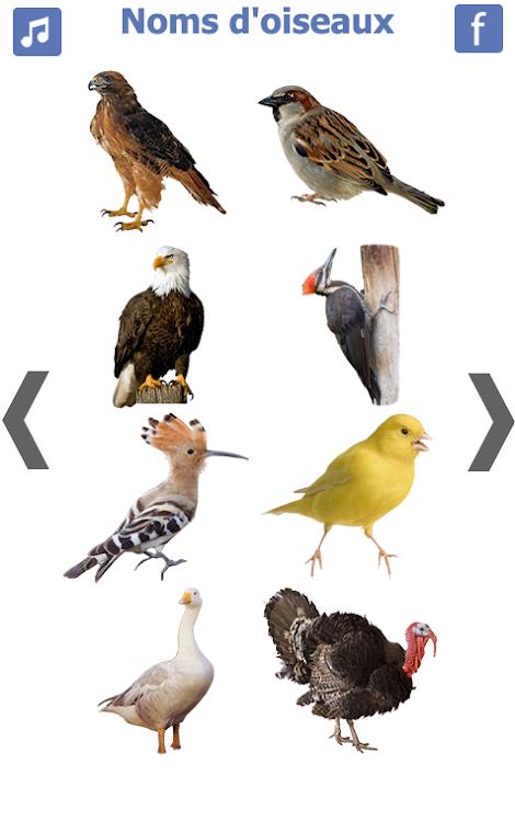 les noms des oiseaux avec photos et