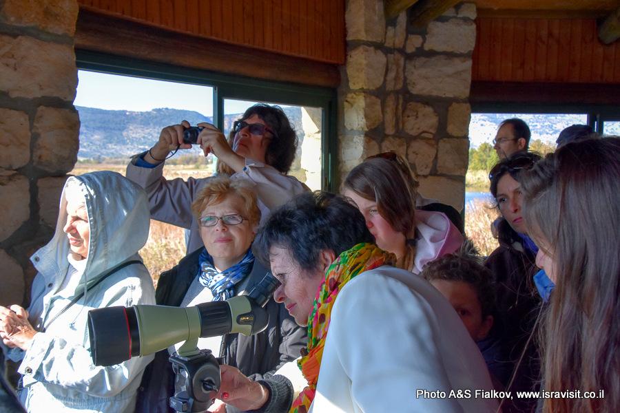 Наблюдение птиц в природе с смотровой площадки заповедника Хула в Израиле.
