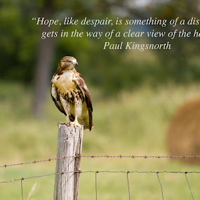 Hawk quote by Cory Seward - Typography Quotes & Sentences ( nature, quote, landscape, photography, hawk )