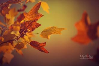 Photo: Fall Setting In