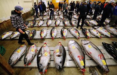 乱獲ニッポンの「クロマグロ漁獲量上限引き上げ」提案が国際的な非難を受けるワケとは?