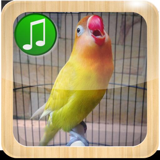 Masteran Lovebird Ngekek Panjang 1 0 Apk Download Com Lovebirdmasteran Ngekeklovebird Pancinganngekekpanjang Apk Free