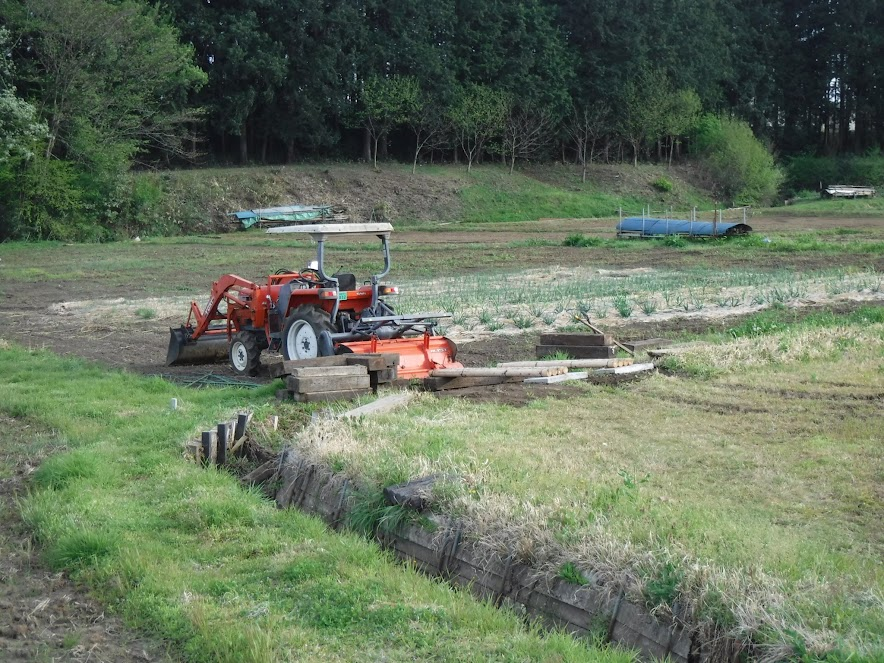 お隣の畑を踏まないとかめの畑に入れません。めくら地というそうです。許可を得て踏ませてもらってます。