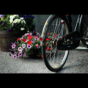 Its going to be a bright sun shiny day by Ashley Humphrey - Instagram & Mobile Instagram ( bike, bright, color, texture, composition, flowers, bicycle )