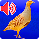 Download Decoys For Quail For Hunting For PC Windows and Mac