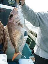 Photo: Uさんもナイスサイズの真鯛ゲット! お顔NGです。