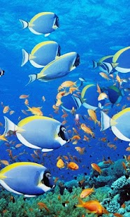 HD Ocean Fish Live Wallpaper - náhled