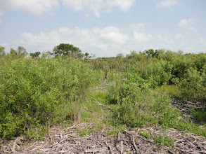 Photo: Vegetation clearning up to the lake.  Scrub Jays (endangered) prefer more open terrain.  Cleaning for archaeology will thus help the Jays!