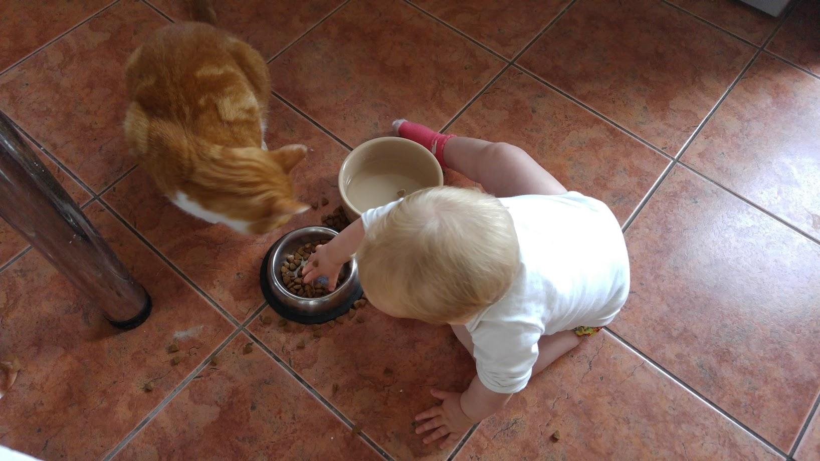 LB cat food