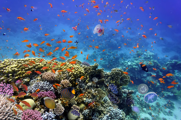 Coral reef and tropical fish in the red sea. File photo.