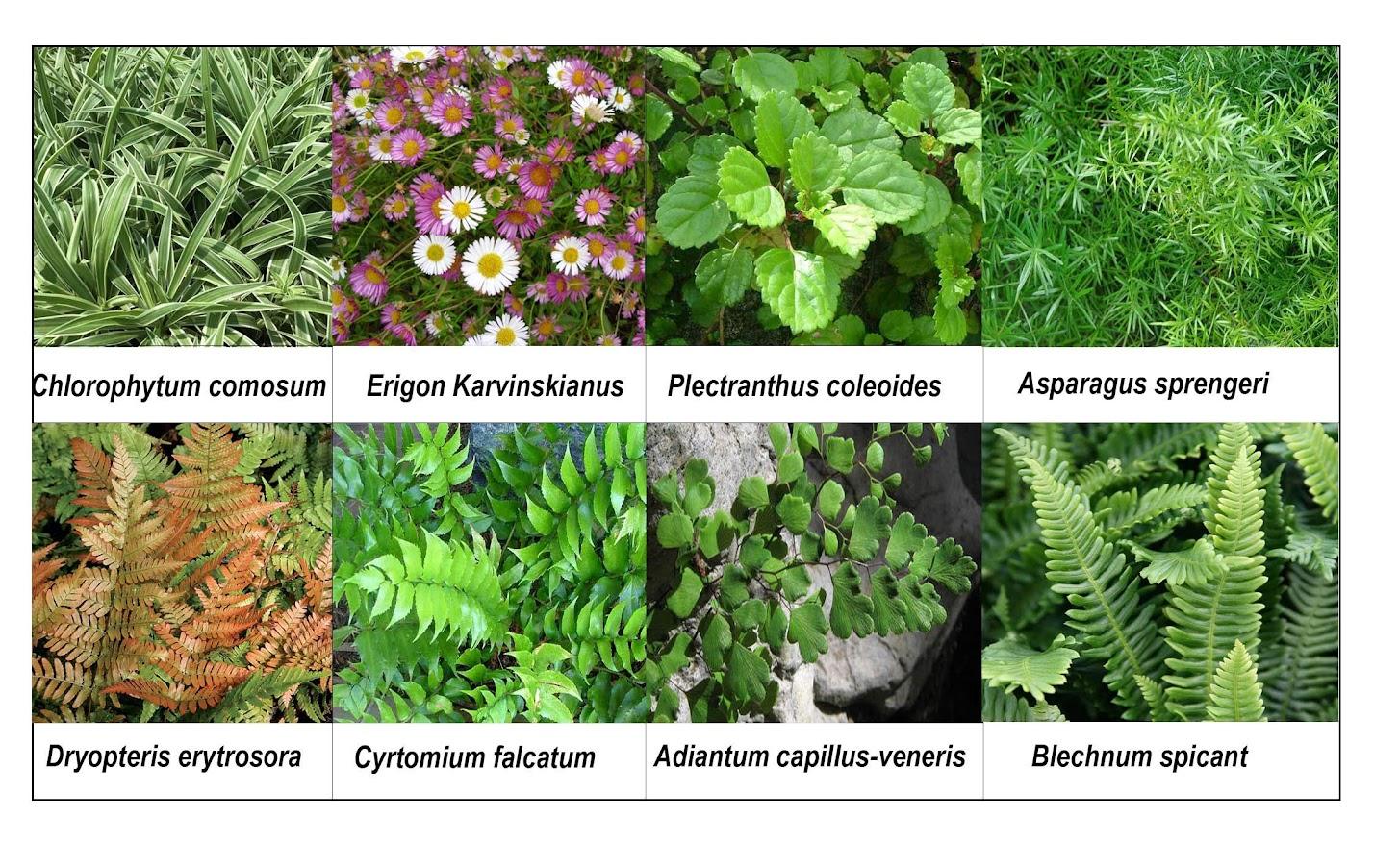 Especies colocadas en el jardín vertical