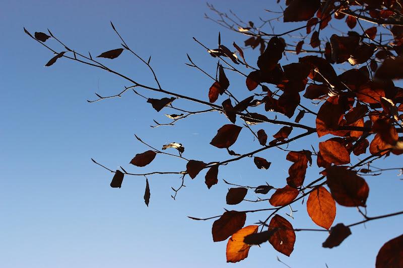 foglie di Lorenza Bellini