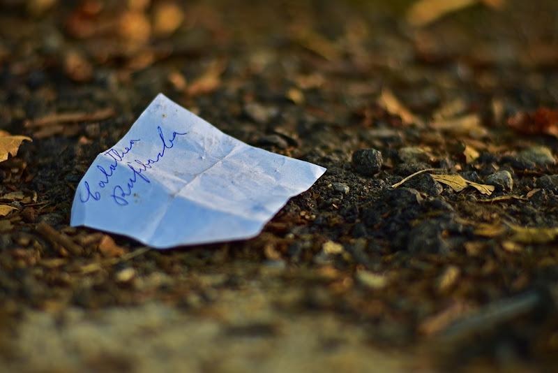 Foglietto di carta sul terriccio di MersaPhotography
