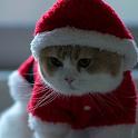 santa claus cat live wallpaper icon