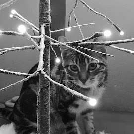Kitty Lights by Lori Fix - Black & White Animals