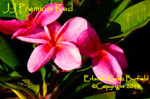 Photo: Premium Red JJ_Erlinda Golez Burfield_2014