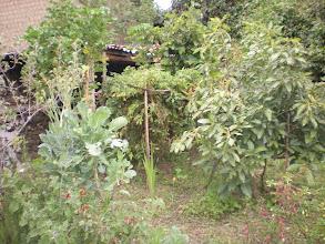 Photo: Garden 3.