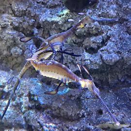 :) by Patricia Dias - Animals Sea Creatures ( close up, underwater, travel, dubai, aquarium )