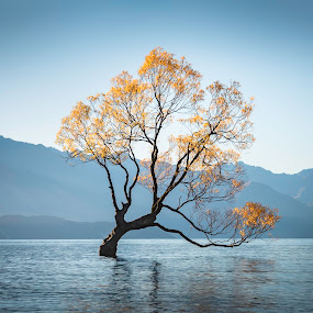 Wanaka 2 by Mark Anolak - Landscapes Waterscapes ( fall colors, waterscape, tree, lake, new zealand )