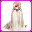 Dog Breeds Test icon