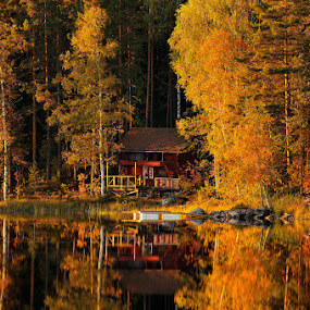 The colors of autumn by Ronnie Bergström - Landscapes Forests ( reflection, autumn, colors, forest, sun )