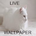 gato live wallpaper icon