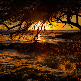Sunset at a Luau by Brent Sharp - Landscapes Sunsets & Sunrises ( hdr, tree, splash, silhouette, sunset, sea, ocean, hawaii, sun,  )