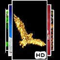 Golden Bird 3D LWP icon