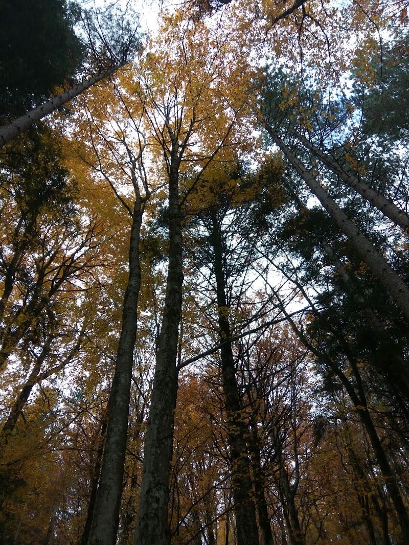 La maestosita del autunno di roby9229