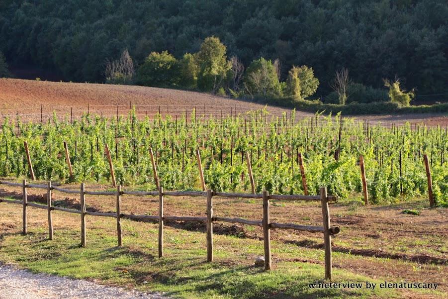 montauto, montauto vini, vigneto, maremma vino, maremma wine, vineyard maremma