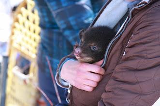 Photo: Black bear cub