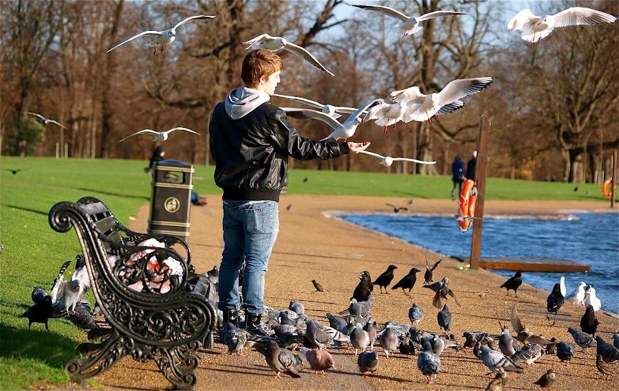 Man and Birds  by Georgios Kalogeropoulos - Animals Birds ( colour, man and birds, park, boy, birds )