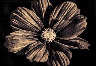 Photo: I wish all of you a good weekend.  +FloralFriday #floralfriday by +Tamara Pruessner +HQSP Flowers #hqspflowers  +Film Noir Friday #filmnoirfriday  #plusphotoextract    Calendar? This way -> http://www.meinbildkalender.de//galerie.cfm?sesid=&shopid=861182 Prints? This way -> http://markuslandsmann.zenfolio.com/