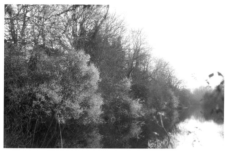 trees-copy.jpg