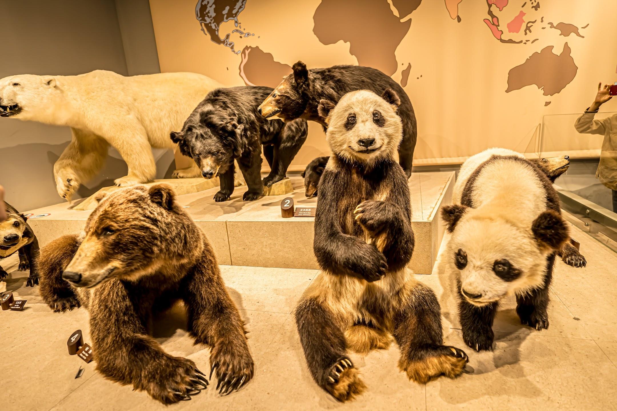 上海自然博物館4