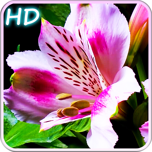 Blooming Flowers Icon