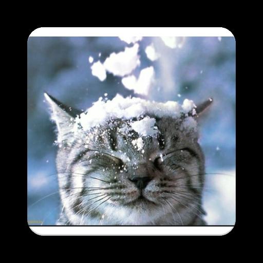 Cute Baby Cats (app)