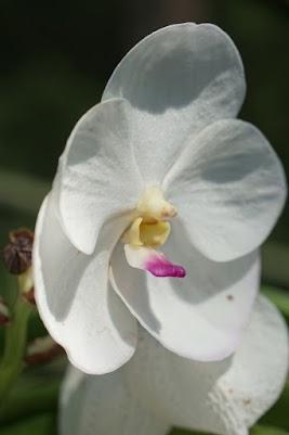 Orchideen Farn bei Mae Taeng